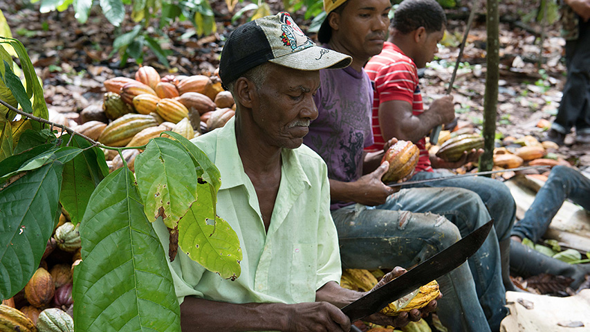 Dominican Republic Grand Cru and Single origin