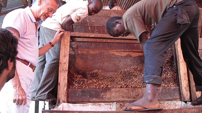 Uganda: high ground cocoa