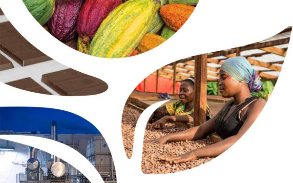 ICAM Cioccolato issues its first sustainability report